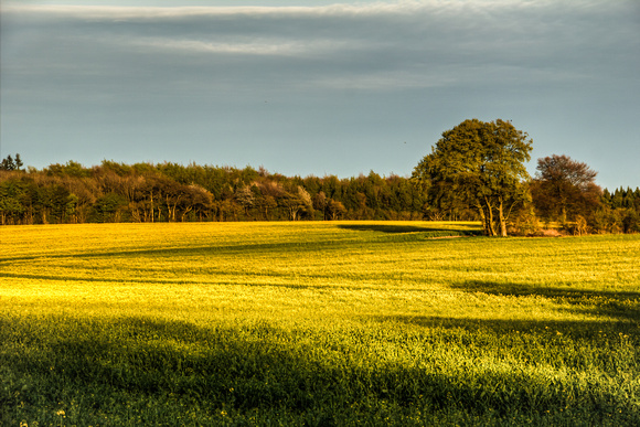 Yellow field...